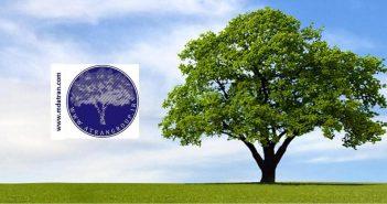 بذرهای مناسب کاشت در هر استان در روز درختکاری عطران atran