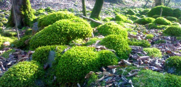 بررسی تاثیرات مکان دفن زباله بر خاک اکوسیستم های جنگلی سمسکنده