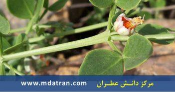بررسی قابلیت ترسیب کربن گونه قیچ (Zygophyllum atriplicoides) در خاک مرتع لوچوناسی شهرستان زاهدان عطران atran